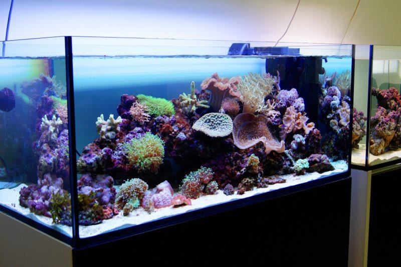 Akvarium v gostinoy 47