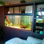 Akvarium v gostinoy 62