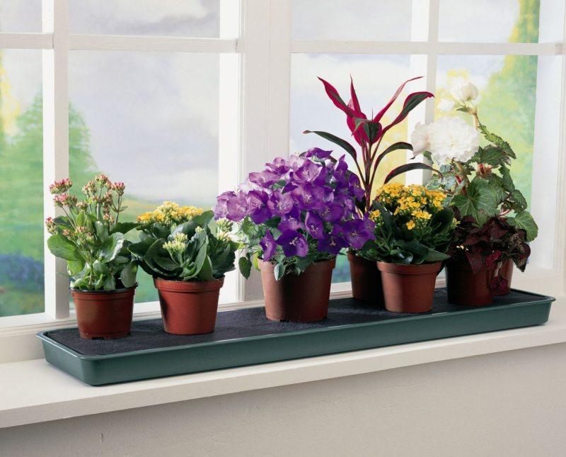Какие цветы полезно держать в квартире с
